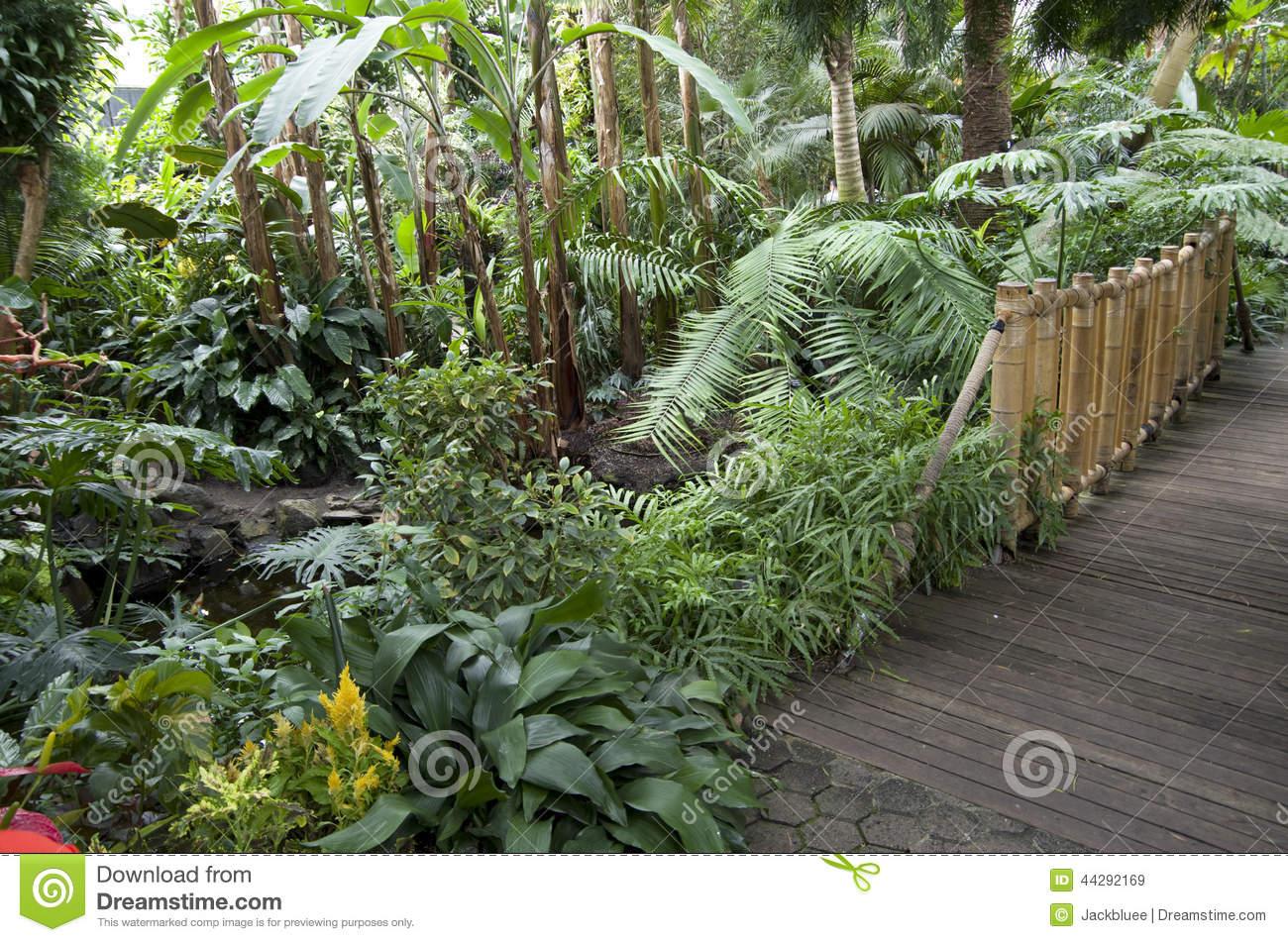 Subtropical Garden Plants Stock Photo.