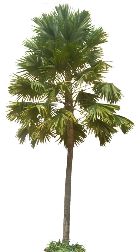 A Collection of tropical (and subtropical) plant images with.