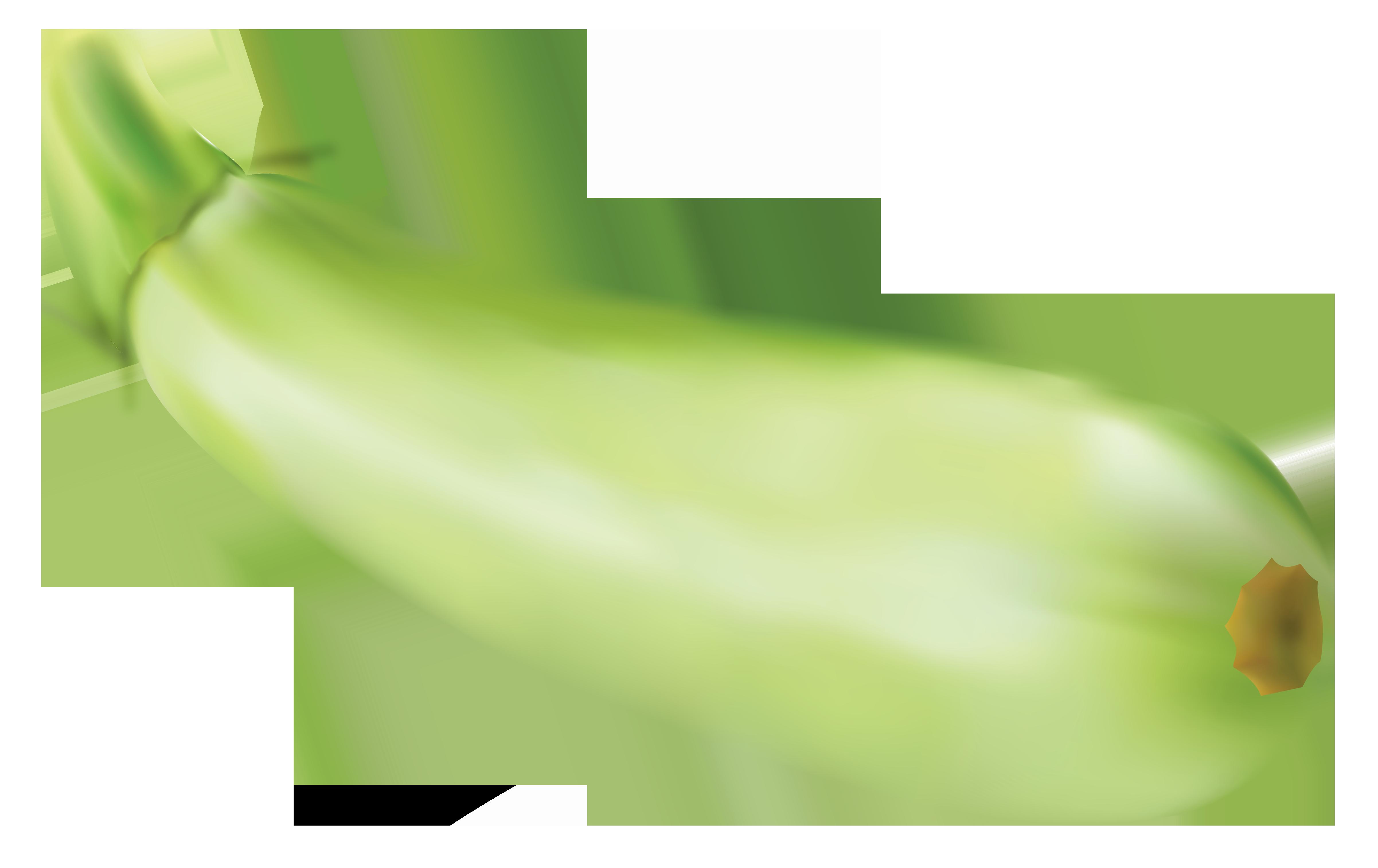 Zucchini clipart free.