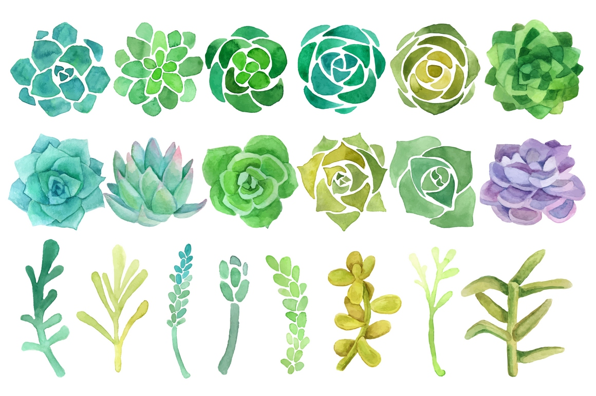 Watercolor cactus and succulent clipart set by Abracadabraaa.