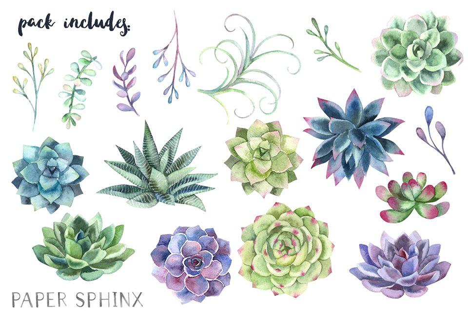 Watercolor Succulents Clipart FREE DOWNLOAD! on Behance.