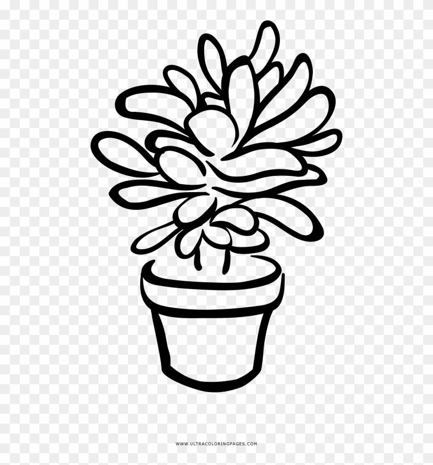 Succulent Coloring Page.