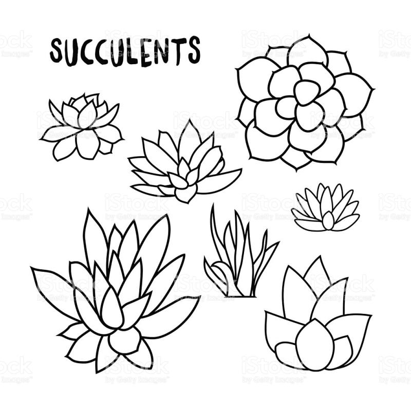 Succulent clipart black and white 7 » Clipart Station.