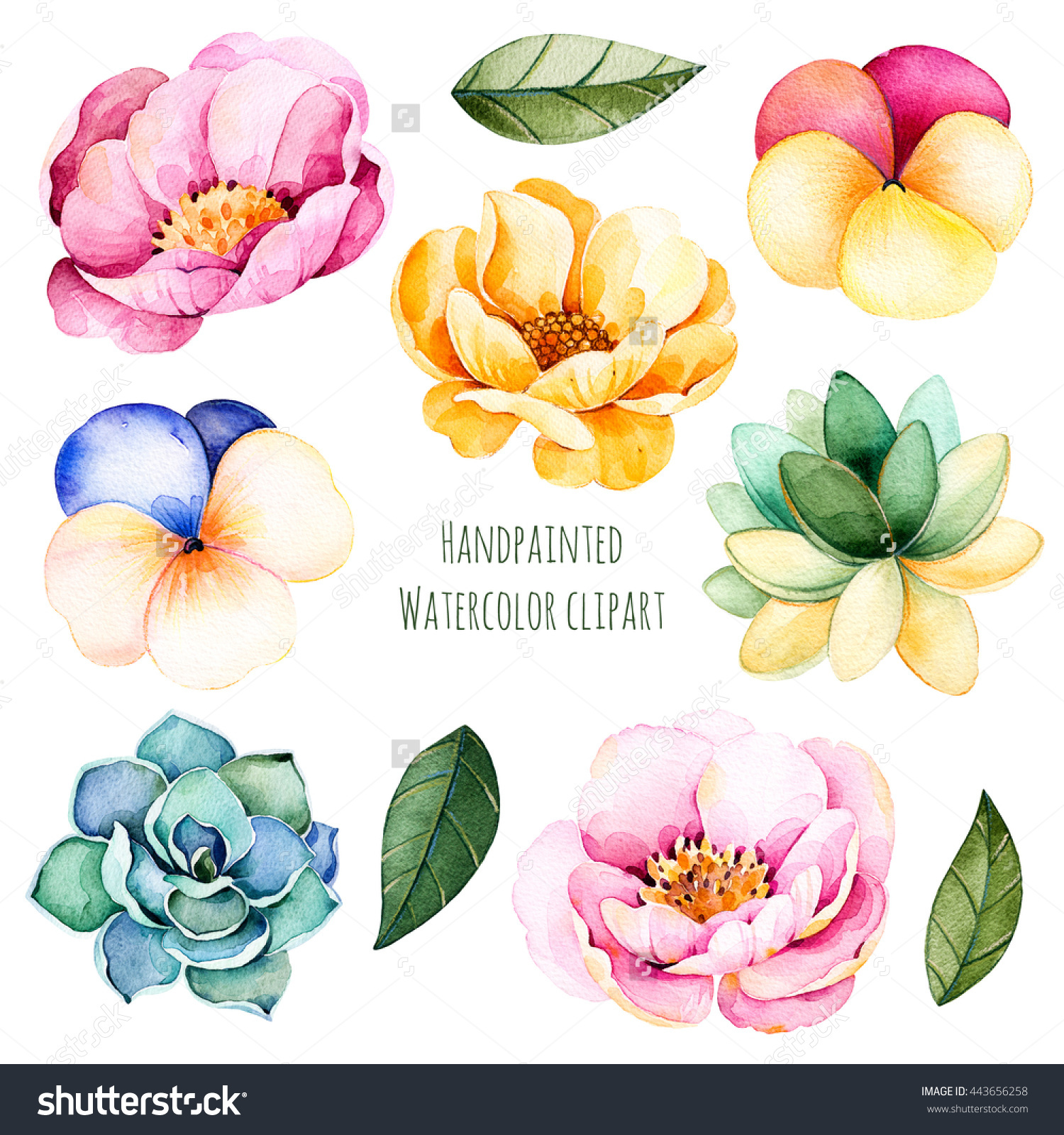 Handpainted Watercolor Flowers Leaves10 Watercolor Clipart Stock.