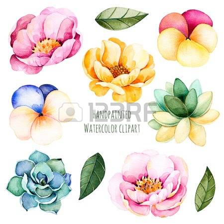 10,999 Succulent Stock Vector Illustration And Royalty Free.