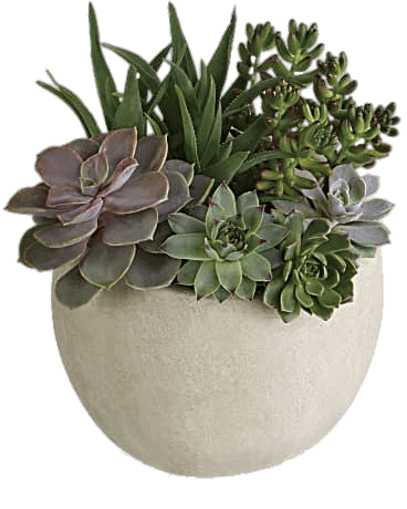 Succulent Variety transparent PNG.