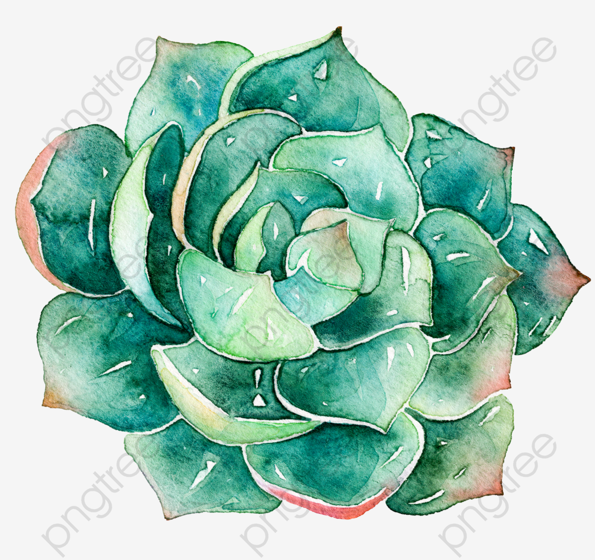 Succulents, Watercolor, Plant, Flower Va #527270.