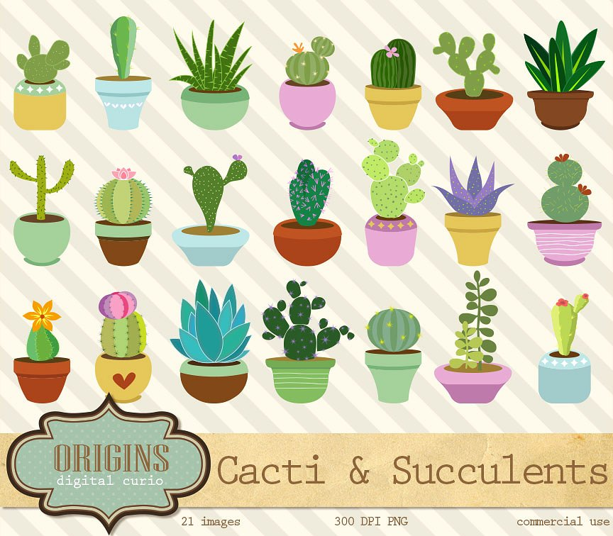 Cacti and Succulents Clipart ~ Illustrations on Creative Market.