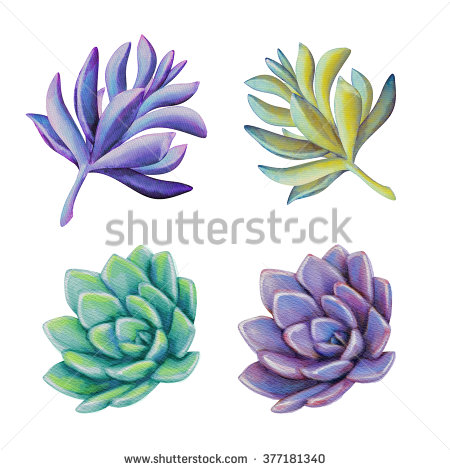 Watercolor Succulent Clip Art Stock Photos, Royalty.