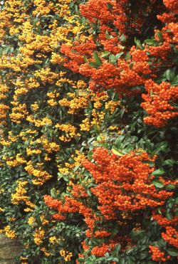 1000+ ideas about Flowering Shrubs For Shade on Pinterest.