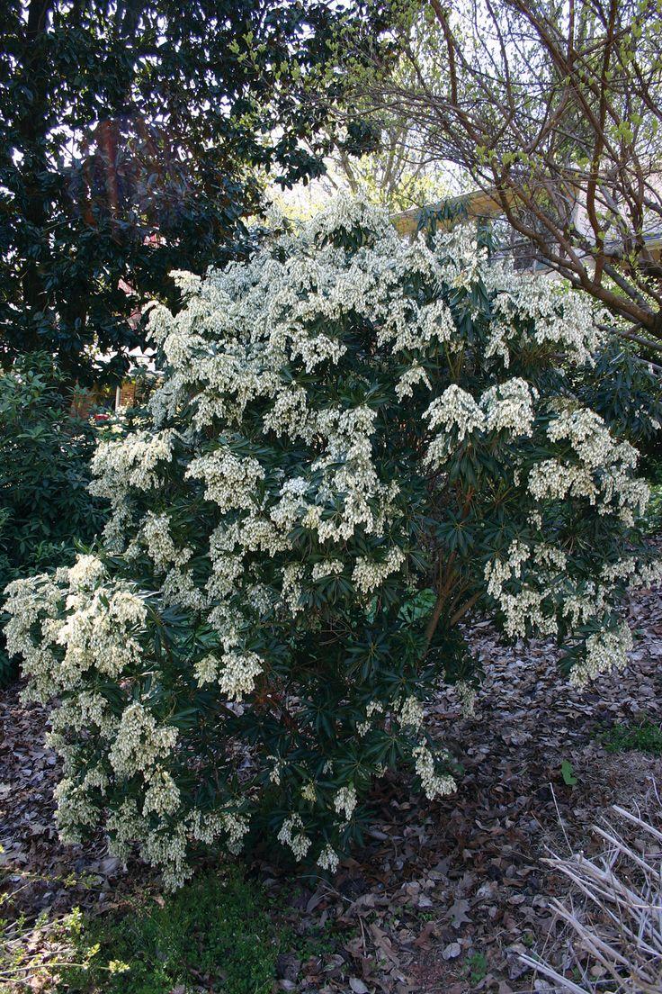 1000+ images about Flori,pomi,arbusti on Pinterest.