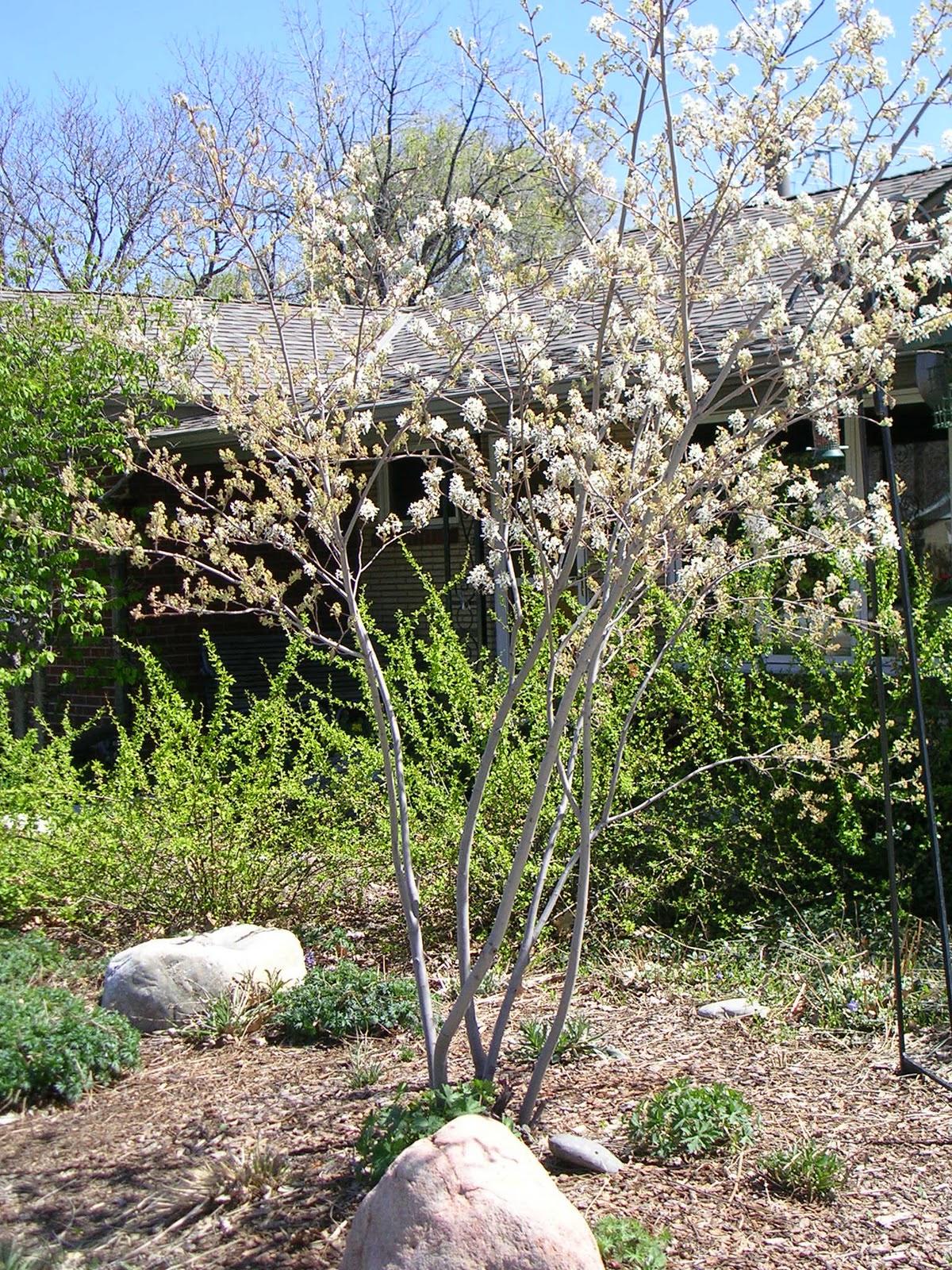 Front Range Tree Recommendation List©.