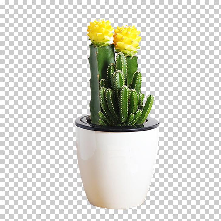 Mammillaria herrerae Flowerpot Cactus y suculentas Succulent.