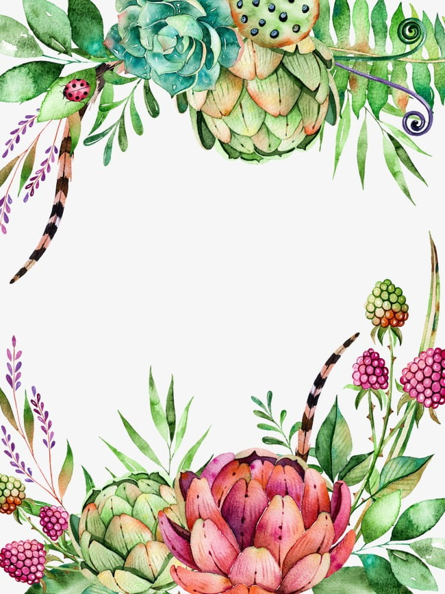 Plantas suculentas PNG Clipart.