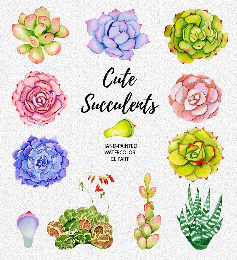 Clipart de plantas suculentas, pintado a mano, elementos diy.