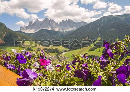 Stock Photo of Odle,Val di Funes,Sudtirol,Italy k15372274.