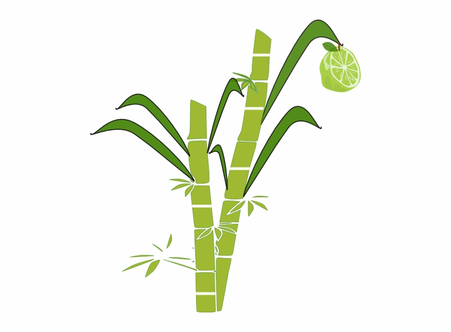 Jpg Transparent Stock Collection Of Sugar Cane Clipart.
