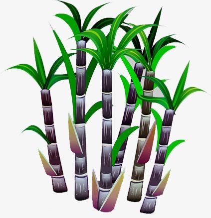 Sugar Cane, Sugar Clipart, Food PNG Transparent Image and.