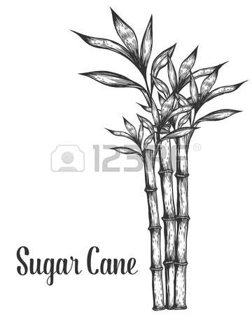Sugar cane clipart black and white » Clipart Station.