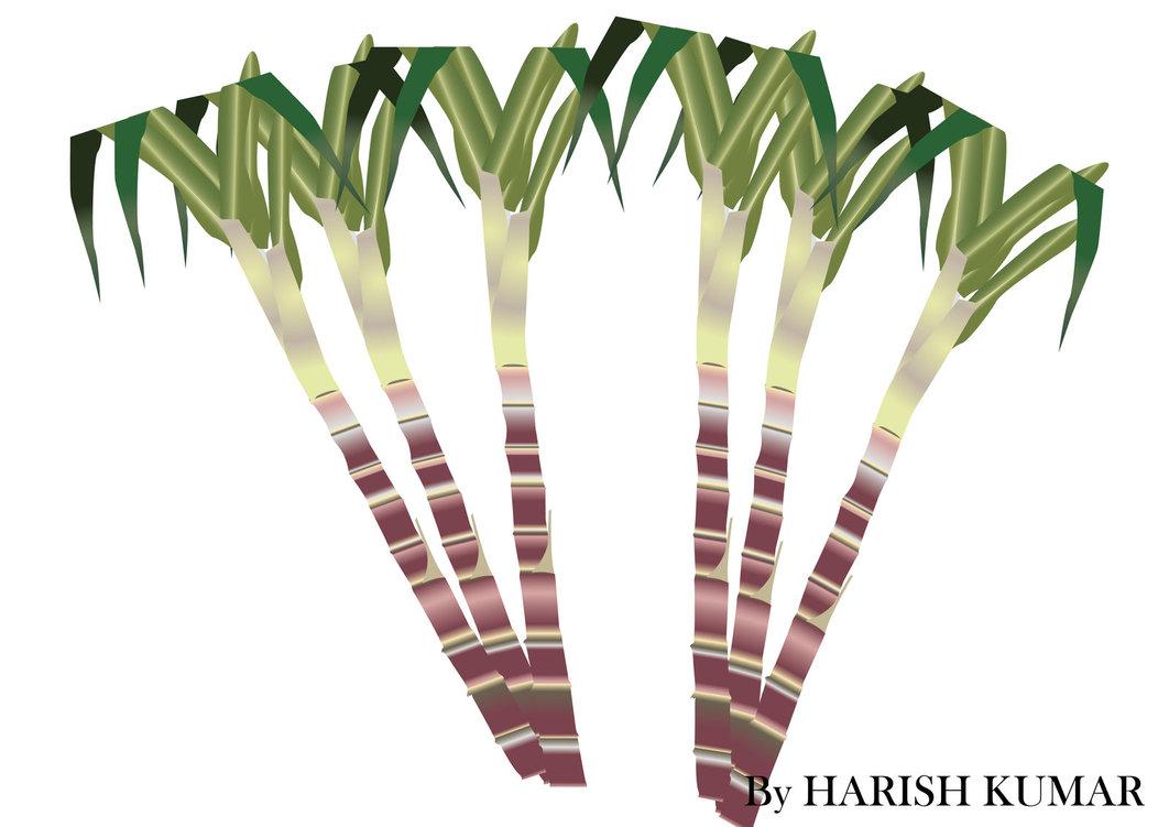 Clipart sugar cane.