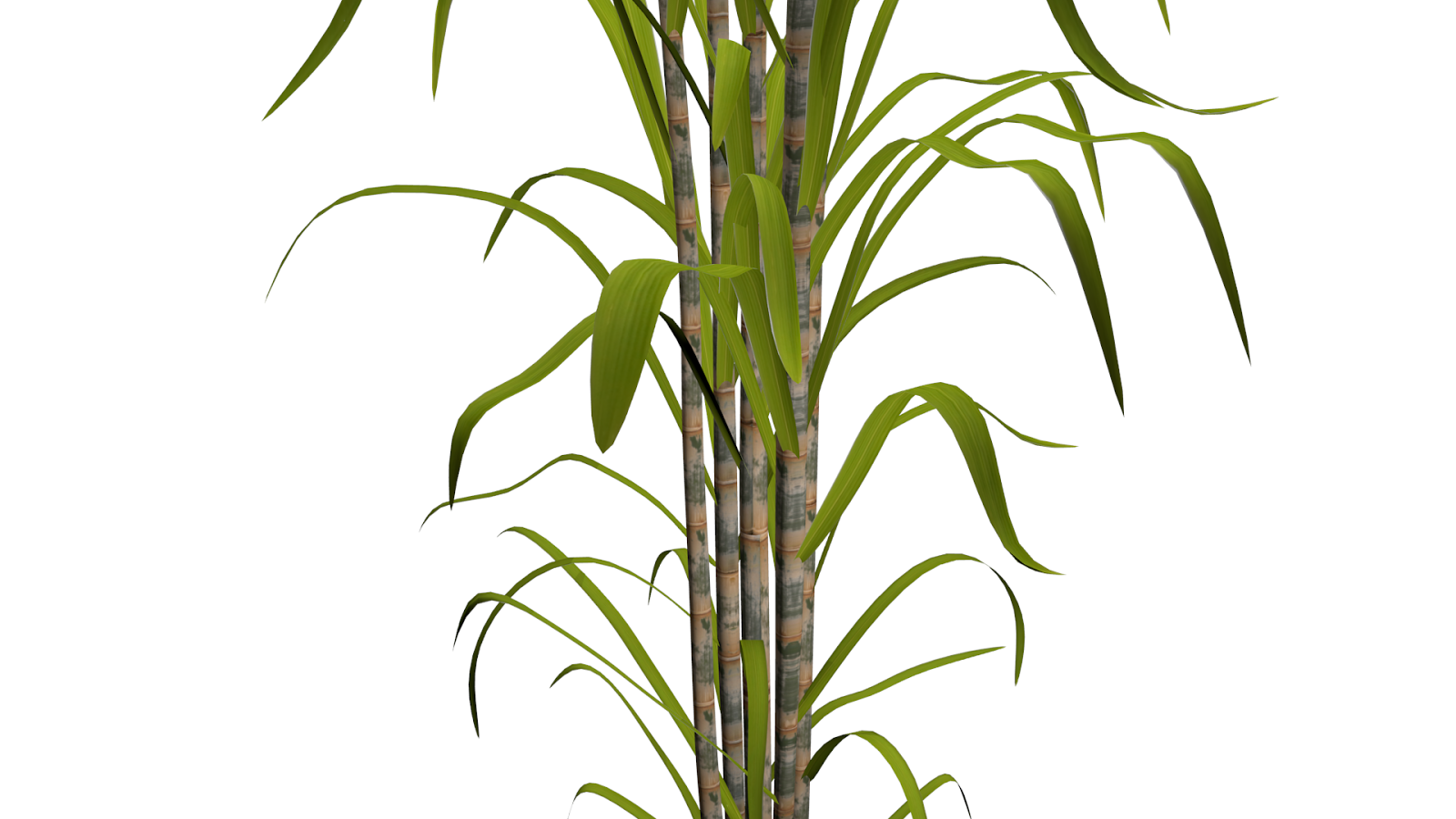 Sugar Cane Png (108+ images in Collection) Page 2.