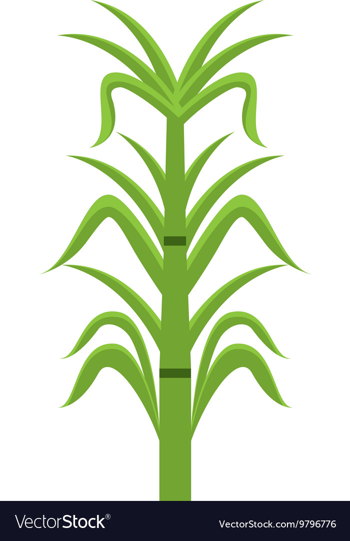 Sugar cane isolated icon design.