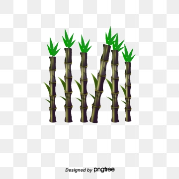 Sugar Cane Png, Vector, PSD, and Clipart With Transparent.