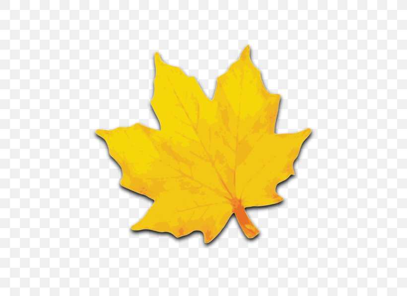 Sugar Maple Maple Leaf Yellow Clip Art, PNG, 594x597px.