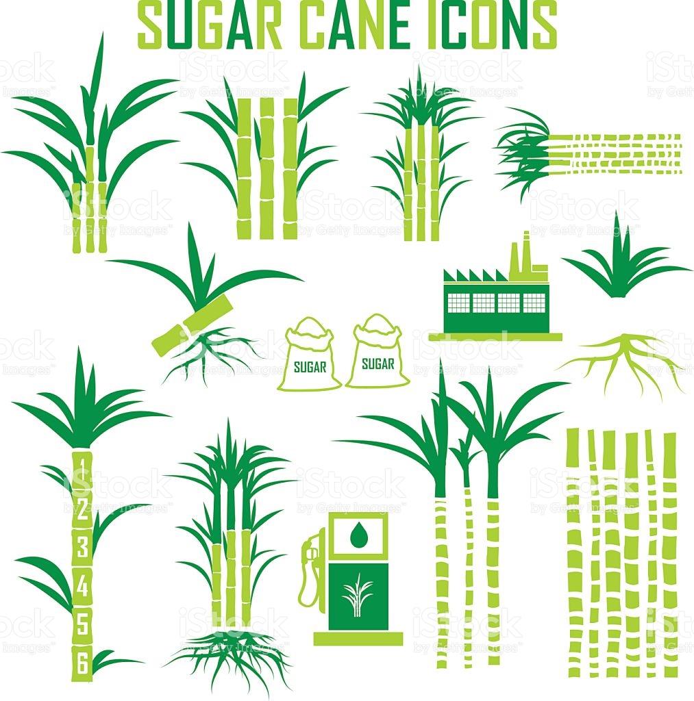 Sugar Cane Clip Art, Vector Images & Illustrations.