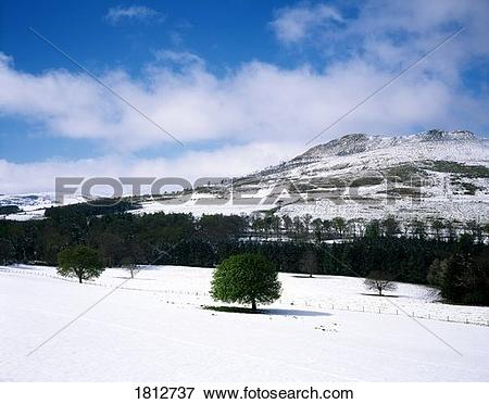 Picture of Little Sugarloaf Mountain, Co Wicklow, Ireland 1812737.