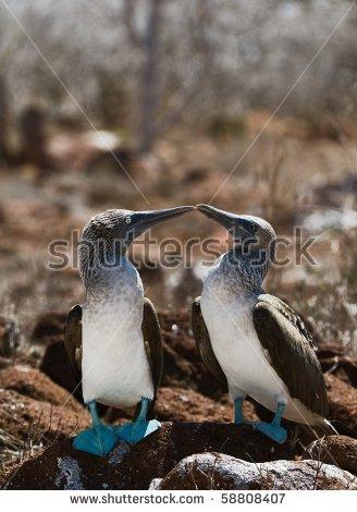 Galapagos Birds Stock Photos, Royalty.