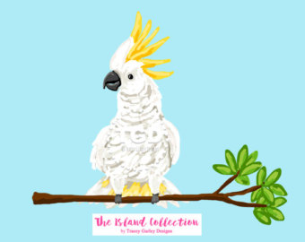 White cockatoo.