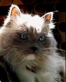 Ringworm In Cats: How Can Lime Sulfur Dip Treat Feline Ringworm.