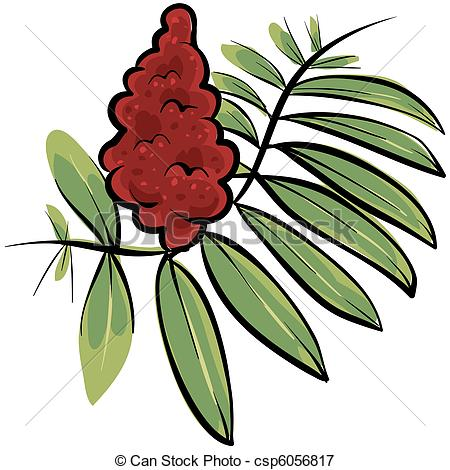 Sumac Stock Illustrations. 20 Sumac clip art images and royalty.