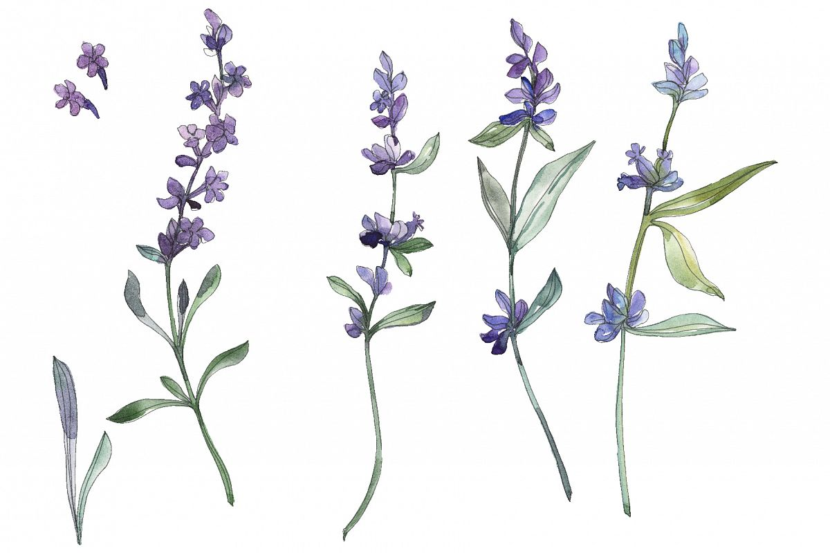 Bouquet summer breeze lavender watercolor png.