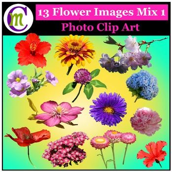 1000+ ideas about Clipart Of Flowers on Pinterest.