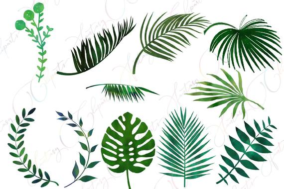 Watercolor greenery, leaves clipart, tropical summer, palm.