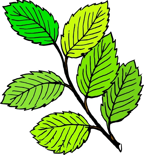 Summer Leaves clip art Free vector in Open office drawing.