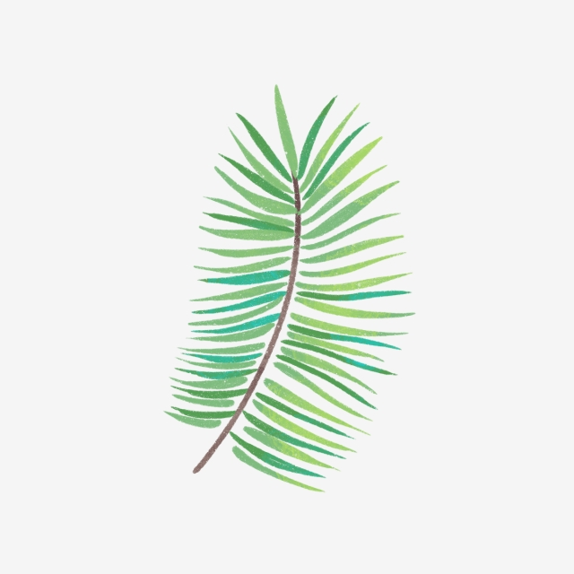 Hand Drawn Green Summer Leaves, Drawing, Nature, Summer PNG.
