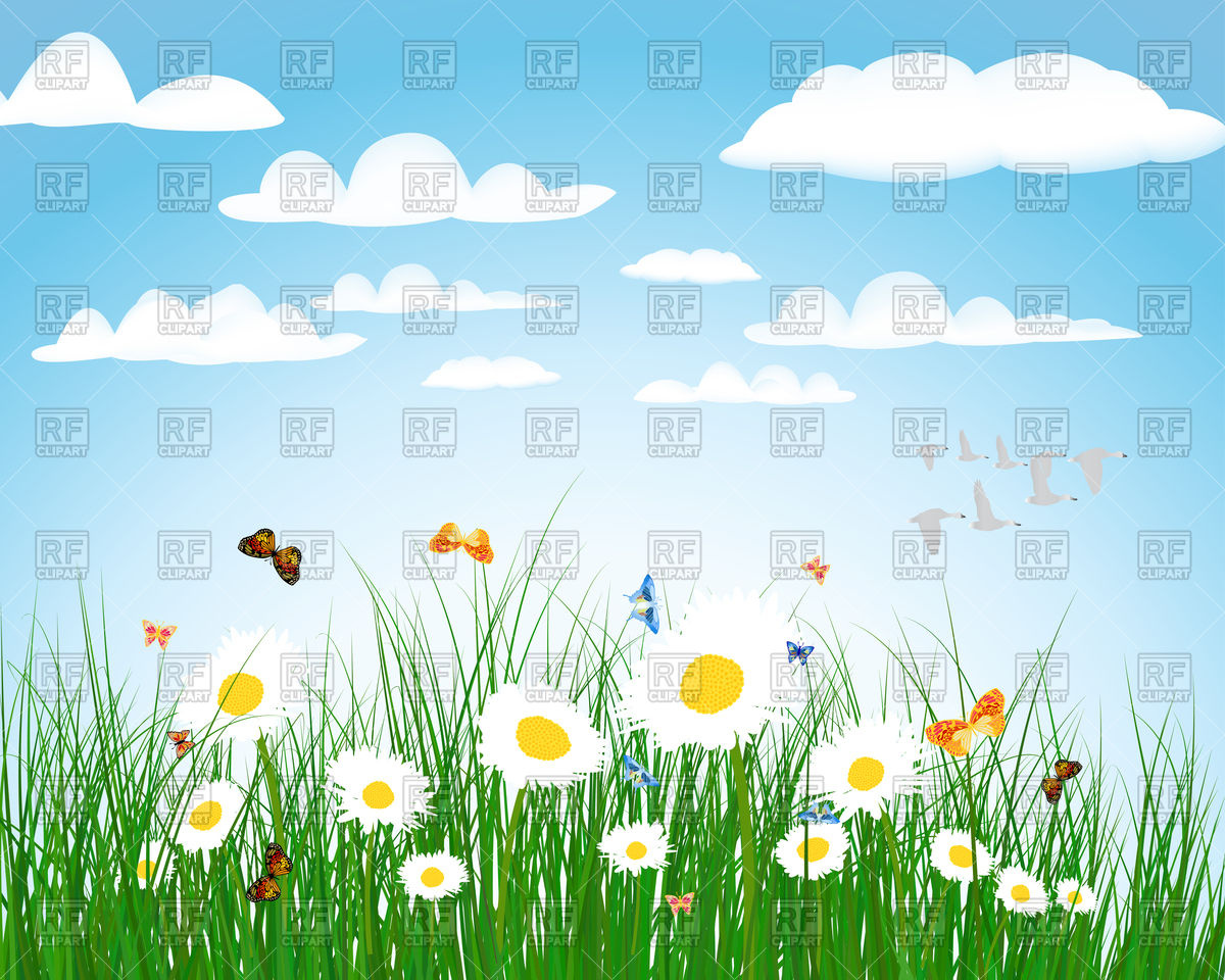Summer meadow background with flowers Vector Image #107841.