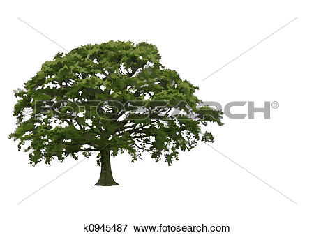 Stock Illustration of Abstract Summer Oak Tree k0945487.