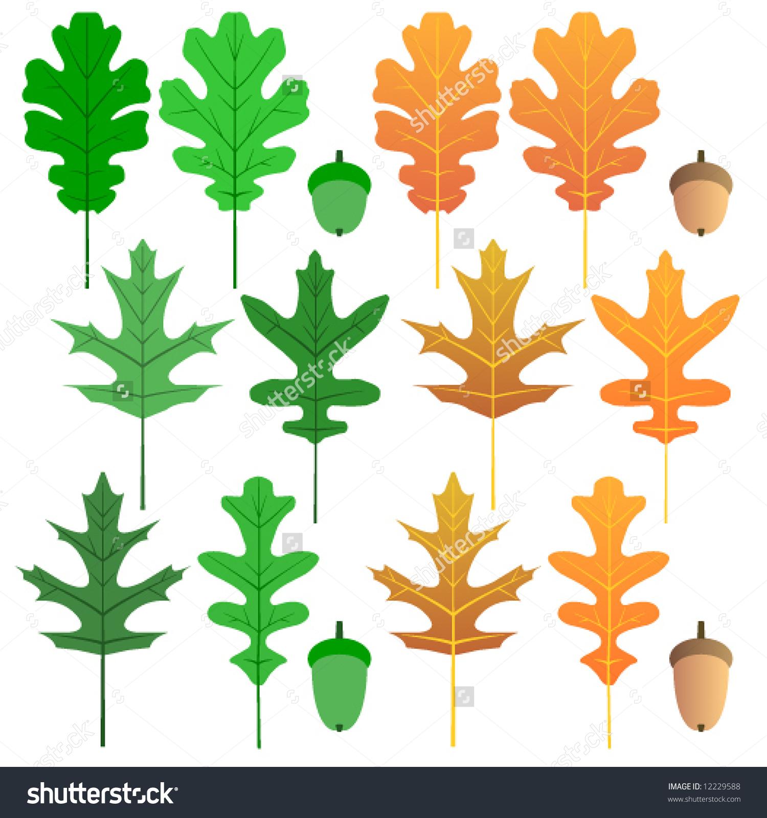 Vector Oak Leaves Acorns Summer Autumn Stock Vector 12229588.