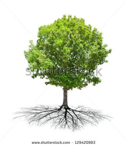 Tree Roots Vector Stock Vector 60384679.