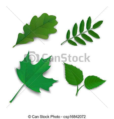 Vectors Illustration of Summer oak maple ash birch leaves.