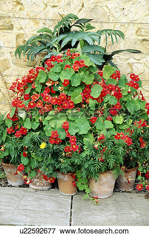 Picture of Colourful flowering summer plants in pots in country.