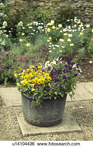 Stock Images of Colourful flowering summer plants in pots in.