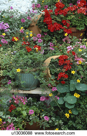 Pictures of Colourful flowering summer plants in pots in country.