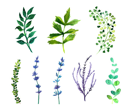 Summer Savory Clip Art, Vector Images & Illustrations.