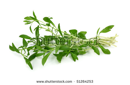Summer Savory Stock Photos, Royalty.