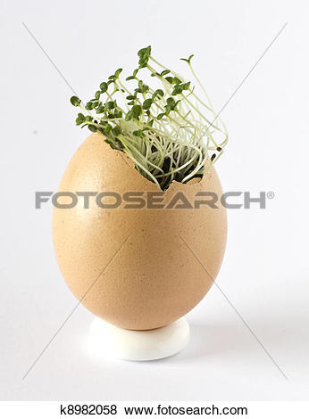 Pictures of Summer savory in an egg shell k8982058.